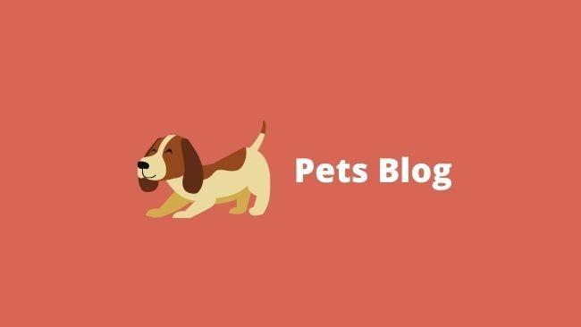 pets blogs